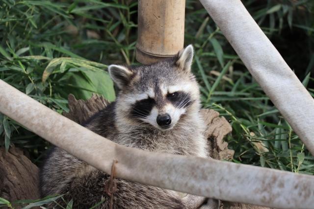 特定外来生物による害獣被害が深刻化。その対策とは|画像1