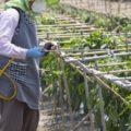 病害から農作物を守る!正しい殺菌剤の選び方&使い方 画像1