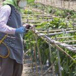 病害から農作物を守る!正しい殺菌剤の選び方&使い方