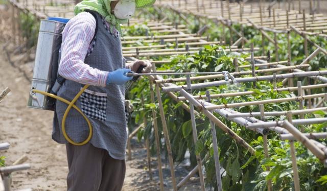 病害から農作物を守る!正しい殺菌剤の選び方&使い方|画像1