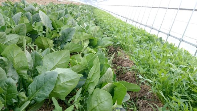 病害から農作物を守る!正しい殺菌剤の選び方&使い方|画像2