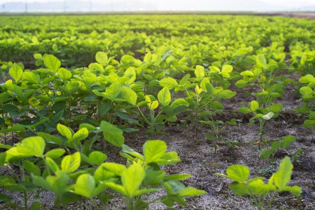 病害から農作物を守る!正しい殺菌剤の選び方&使い方|画像3