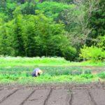 人手不足が危惧される、農業と物流の関係について