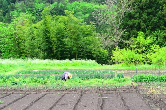 人手不足が危惧される、農業と物流の関係について|画像1