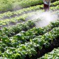 除草剤などの農薬を長期間使うと何に影響がある? 画像1