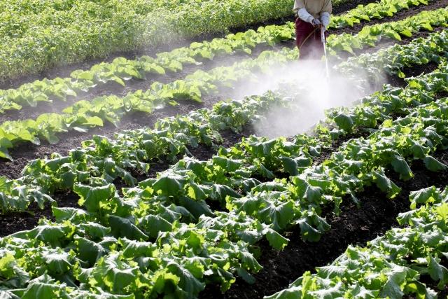除草剤などの農薬を長期間使うと何に影響がある?|画像1