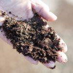 土着菌を活用しよう!土壌づくりに役立つ土着菌のススメ