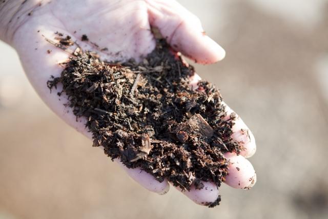 土着菌を活用しよう!土壌づくりに役立つ土着菌のススメ||画像1