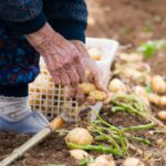 農家ブリッジプロジェクトとは。後継者不在の農家と農業したい人をつなぐもの