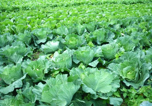 重量野菜の価格の乱高下はなぜ起きる?|画像3