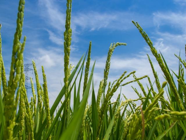 農薬を使わない湯温消毒法。湯温消毒の仕組みとその効果|画像1