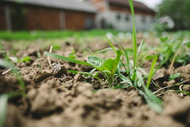 農業における土壌消毒とは?|画像1