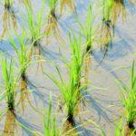 農林水産省と直接つながる一農ネット とは?