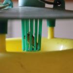 フェロモントラップの設置方法と注意点