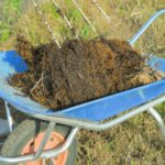 土壌病害の防除に効果的な「土壌消毒」。注目されている低コストな土壌消毒法を紹介|画像1