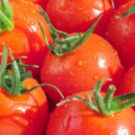 人気の高い「高糖度トマト」の栽培技術