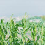 猛暑対策に!農業用遮光ネットの活用法