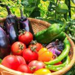 収穫作業が楽な野菜とは?