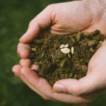 種苗法で自家採種はどう変わる?