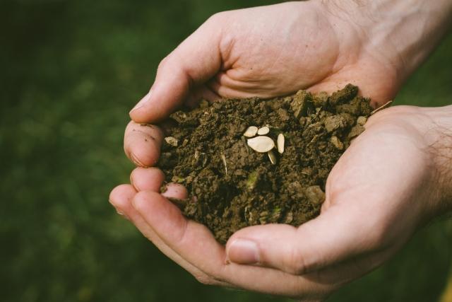 種苗法で自家採種はどう変わる?|画像1