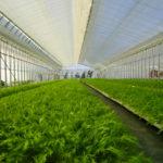 「わーくはぴねす農園」と民間企業が初タッグ 地域全体で障がい者雇用をサポート