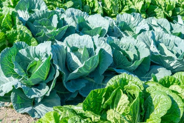 需要高まるカット野菜と規格外野菜の関係|画像2