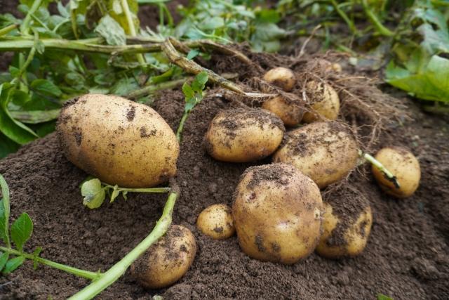 需要高まるカット野菜と規格外野菜の関係|画像3