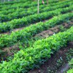 新規就農に興味をもったら、まずは農業体験を〜②千葉県の事例〜