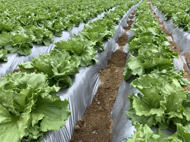 農林水産省が推進する「農福連携」とは。福祉の場としての農業。|画像2