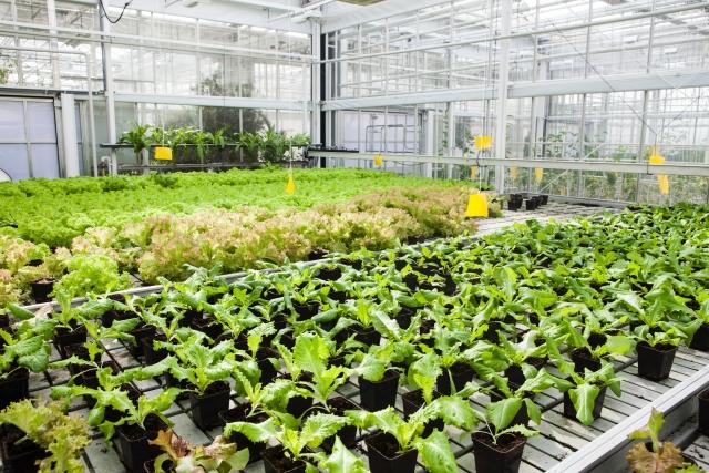 農林水産省が推進する「農福連携」とは。福祉の場としての農業。|画像3