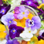 """食用花ビオラに全食材トップクラスのポリフェノール含有量を証明 """"エディブルフラワーのスーパーフード宣言"""" 食べられる花屋EDIBLE GARDENが発表"""