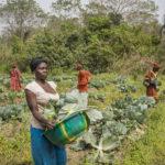 食料ロス・廃棄削減への大きな進展がSDGs達成の鍵 2019年版世界食料農業白書