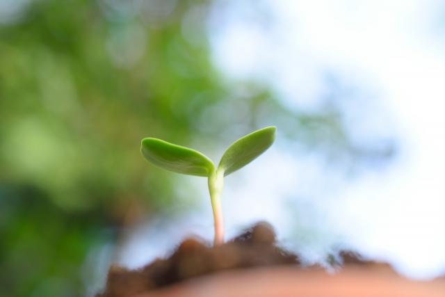 農業と相性がいいサブスクリプションサービスとは。ユニークなサブスクサービスを紹介