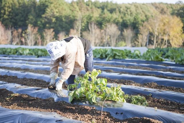 農家の疲労軽減アイテム4選。簡易的なアイテムからアシストスーツまで