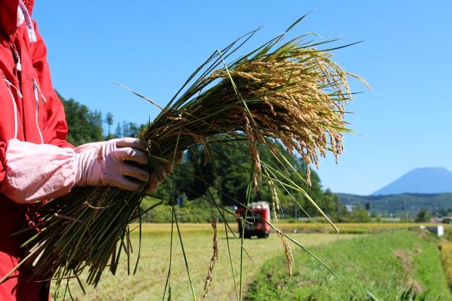 「ノウフクJAS」が始動。障害者雇用と農業の担い手確保で注目を集める農福連携|画像2