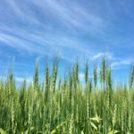日本で大規模農業は可能なのか。大規模農業の現状と今後の展望