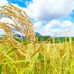 日本農業の強みとは。衰退が危ぶまれる日本農業の強みに迫る!
