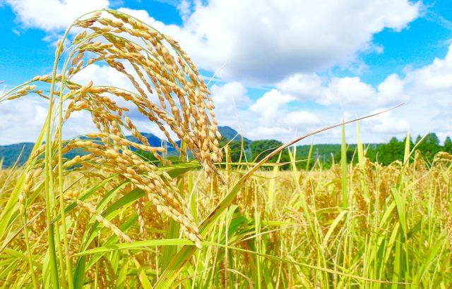 日本農業の強みとは。衰退が危ぶまれる日本農業の強みに迫る!|画像1