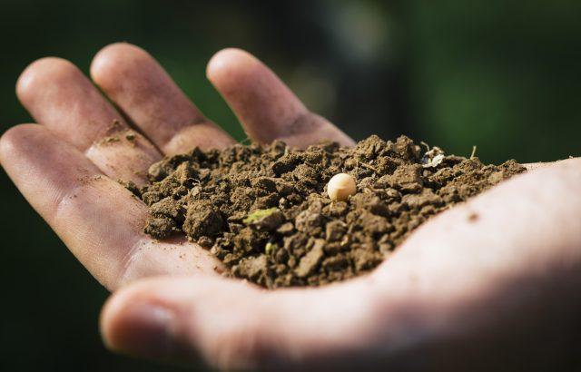 固定種の種を販売サイトまとめ!注目高まる固定種を育てよう。|画像1