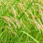 農薬の効果を上げる「展着剤」のススメ。展着剤とは?使用上の注意についても解説