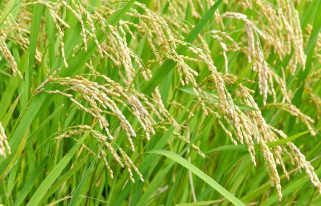 農薬の効果を上げる「展着剤」のススメ。展着剤とは?使用上の注意についても解説|画像1