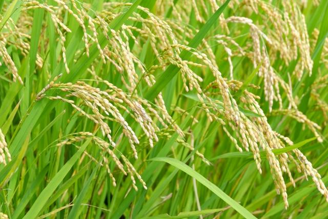 農薬の効果を上げる「展着剤」のススメ。展着剤とは?使用上の注意についても解説 画像1