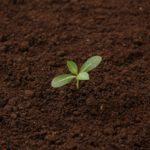 今更聞けない、肥料、堆肥、土壌改良材、バイオスティミュラントの違い!
