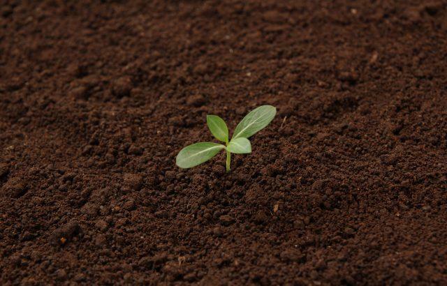 今更聞けない、肥料、堆肥、土壌改良材、バイオスティミュラントの違い!|画像1