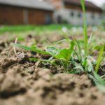 除草剤に頼らない、最新除草方法&新しい除草方法。畑の除草はプロに頼む?!