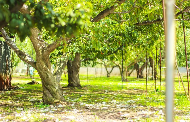 今注目の草生栽培。草生栽培が注目される理由と注意しておきたいデメリットについて。