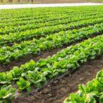 注目集まる業務用野菜生産【後編】業務用野菜生産の助成金について