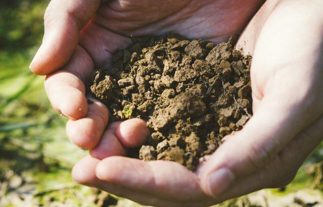 微生物は土壌改良の役に立つ【後編】微生物の生態を利用した土壌改良法とは|画像1