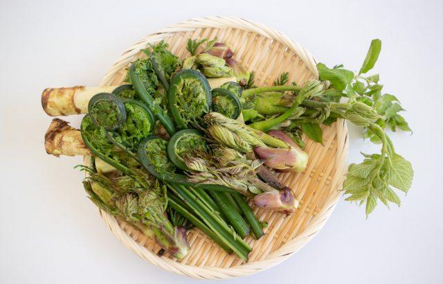 山菜栽培はビジネスチャンス!?山菜栽培の現状|画像1