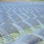 農業用ビニールの廃棄手順、気になる処分費用について。回収費はどのくらいかかる?